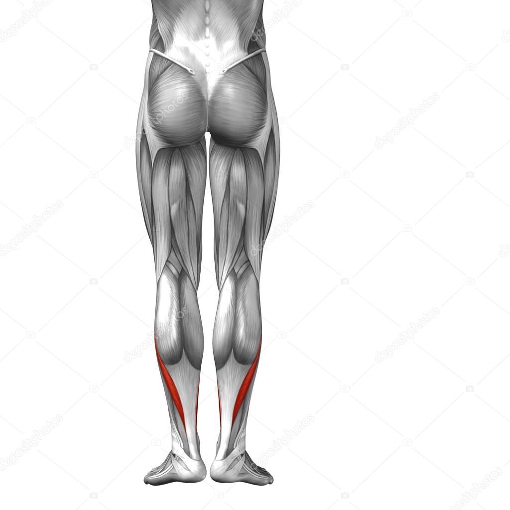 menschlichen Unterschenkel — Stockfoto © design36 #96275534