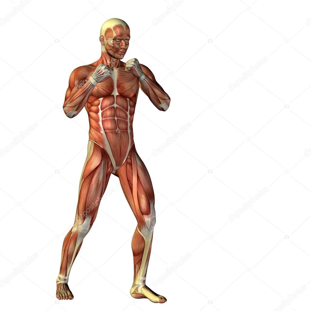 Menschlichen oder Mann mit Muskeln — Stockfoto © design36 #96275770
