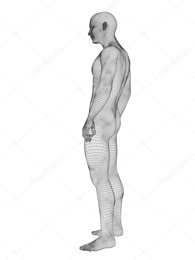 Anatomy Made Of White Wireframe Stock Photo Design36 96277332
