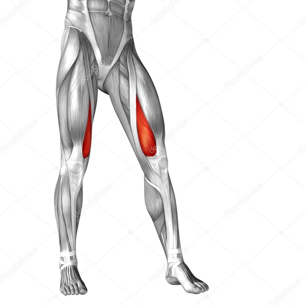 Anatomie der menschlichen Beine — Stockfoto © design36 #96279604
