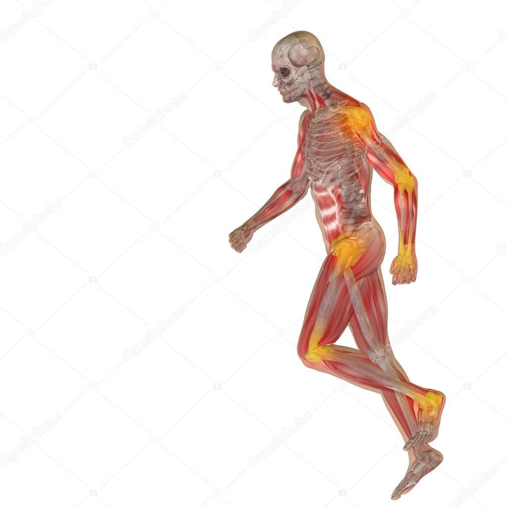 Groß Mensch Anatomy.com Zeitgenössisch - Anatomie Von Menschlichen ...