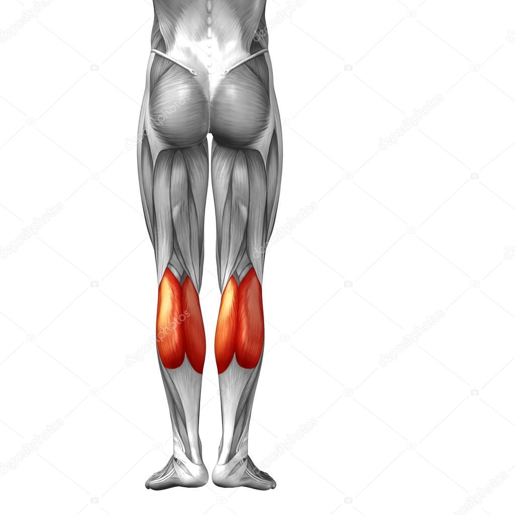 menschlichen Unterschenkel — Stockfoto © design36 #96284926