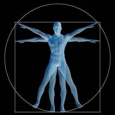 Vitruvian human or man as a concept