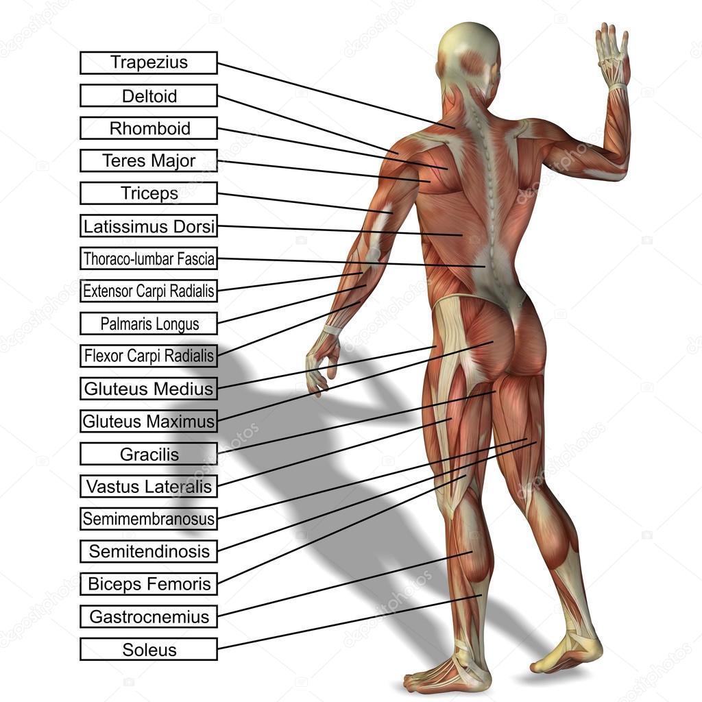 man met spieren en tekst — Stockfoto © design36 #96298472