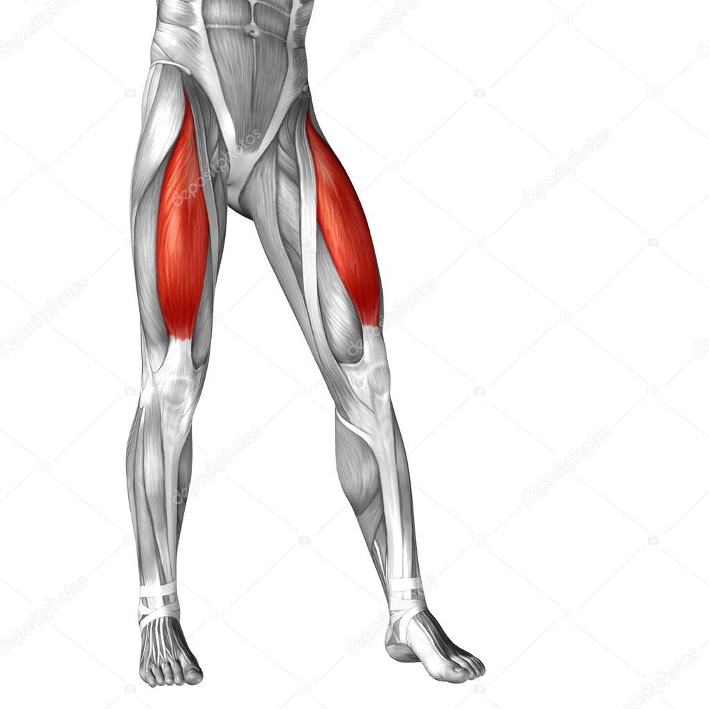 Anatomía de las piernas humanas — Foto de stock © design36 #96303880
