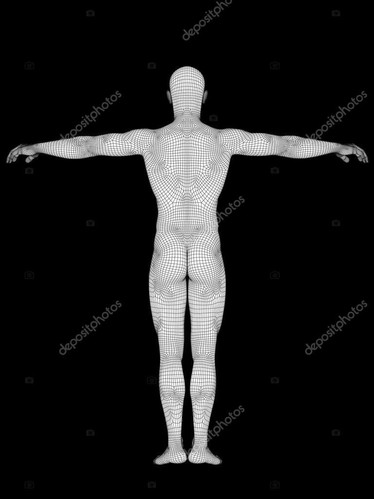 Anatomy Made Of White Wireframe Stock Photo Design36 98337270