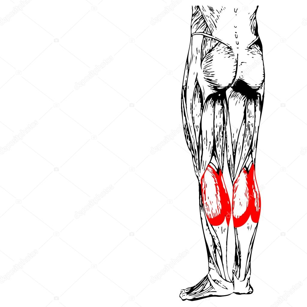 Fein Gummibärchen Anatomie Modell Bilder - Anatomie Ideen - finotti.info