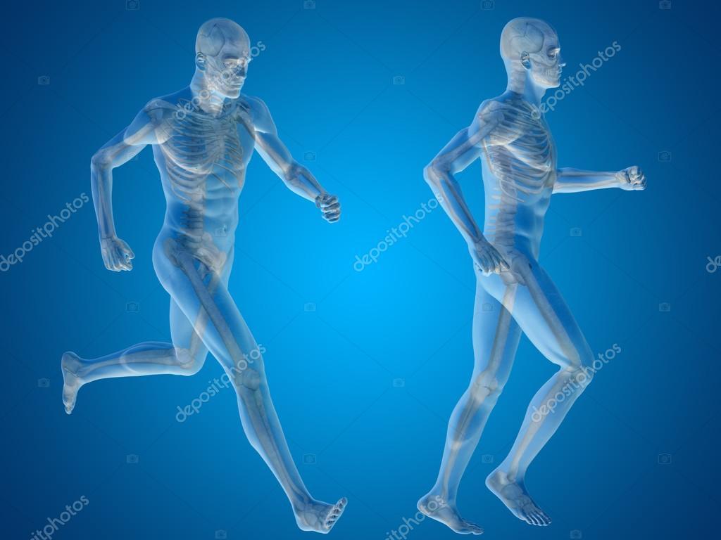 esqueletos masculinos con cuerpos transparentes de anatomía — Fotos ...