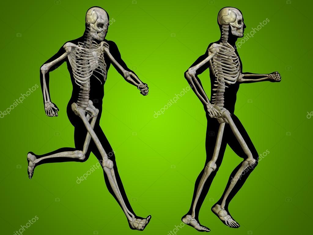 esqueletos masculinos con cuerpos transparentes de anatomía — Foto ...
