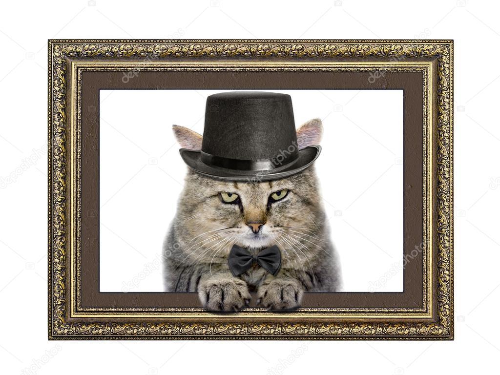 gato en el sombrero y pajarita parece fuera del marco de imagen ...