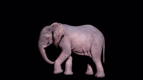 Nagy afrikai elefánt ássa a földet a lábát az elszigetelt háttér alfa csatorna. Zökkenőmentes hurkos animáció állatok, természet és oktatási hátterek számára.