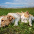 stock-photo-ginger-cat-and-a-dog