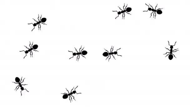 Raj, hangyák, fehér, varrat nélküli hurok a Cg animációs sziluettek