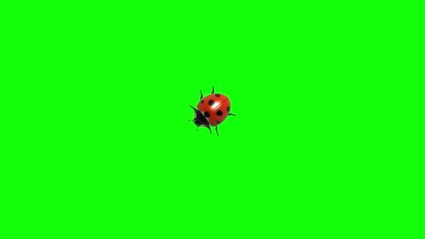 Zöld képernyő Cg animációs, varrat nélküli hurok a katicabogár