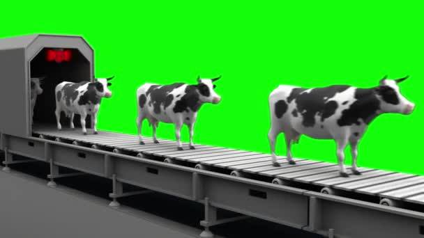Cows on the conveyor belt