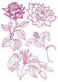 kézzel rajzolt virágok