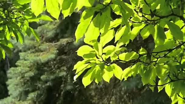 stromy v létě