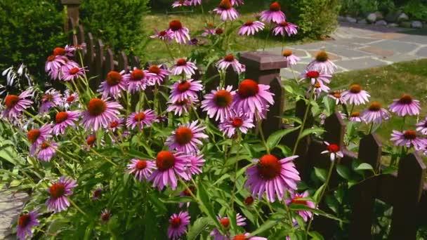 Rosafarbene Blumen im Garten