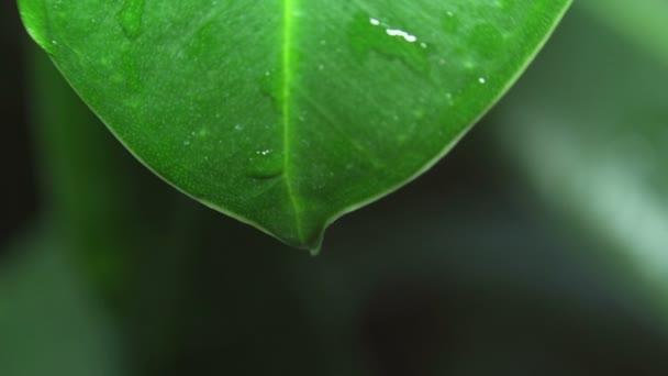 zelený list s kapkou vody