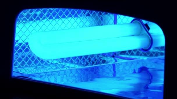 Sušení nehty v Uv lampě