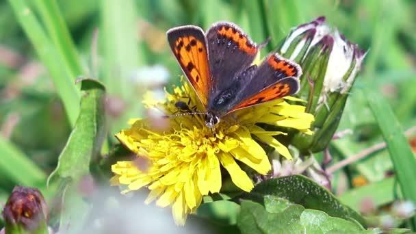 pillangó virág virágportól