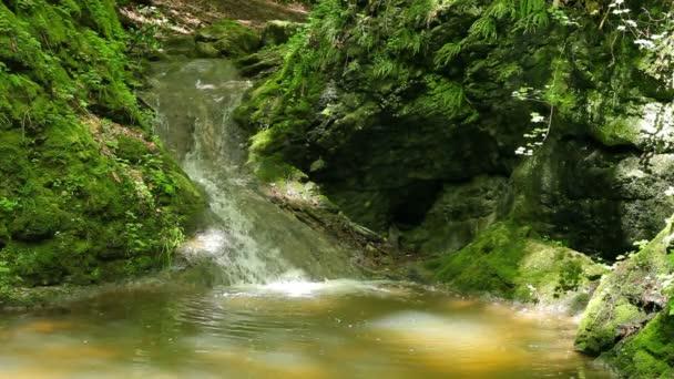 Nad vodopády v lese pravěké teče řeka