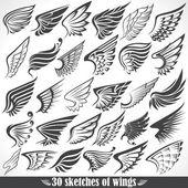 Fotografie velký set skici křídel