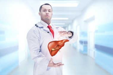 Doctor with liver in hands . High resolution.