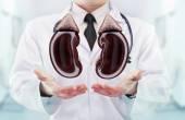 Fotografie Doktor s stetoskop a ledviny na rukou v nemocnici