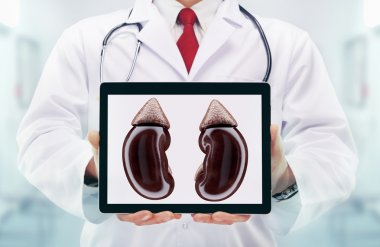 Doctor with stethoscope in a hospital. Kidneys on the tablet