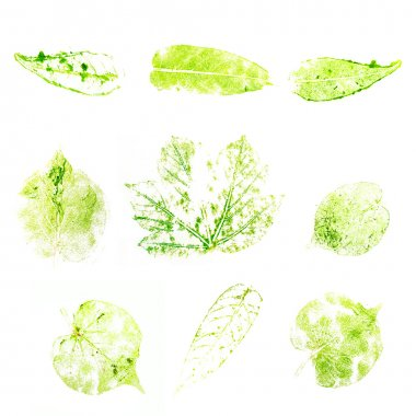 Set imprint of a green leaf isolated on white background