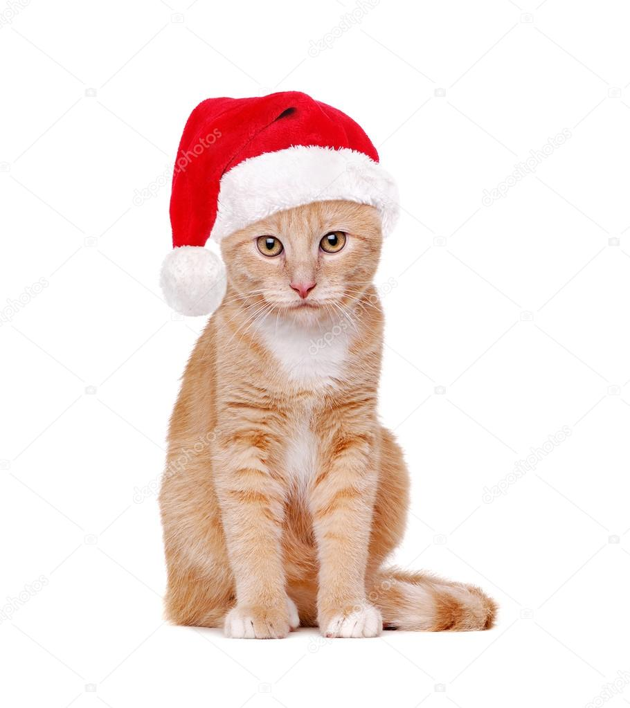 photo santa hat a Sperm wearing