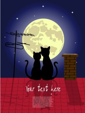 cats on a night roof