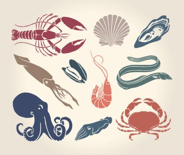 Vintage illustration of crustaceans, seashells and cephalopods