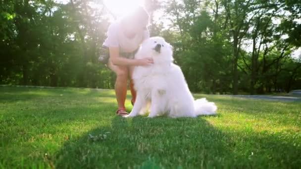 Egy vörös hajú felnőtt nő játszik és simogatja a Samoyed fajtájú kutyáját. Fehér bolyhos kisállat egy parkban szeretővel a zöld gyepen érezd jól magad. Lassú mozgás