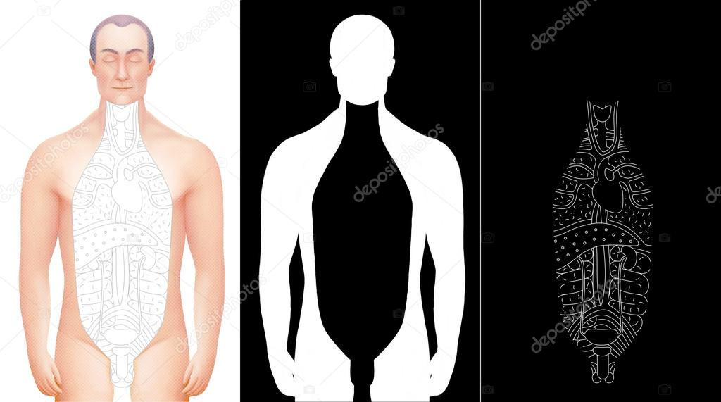 Illustration Of Hand Drawn Excised Male Anatomy Model With Outli