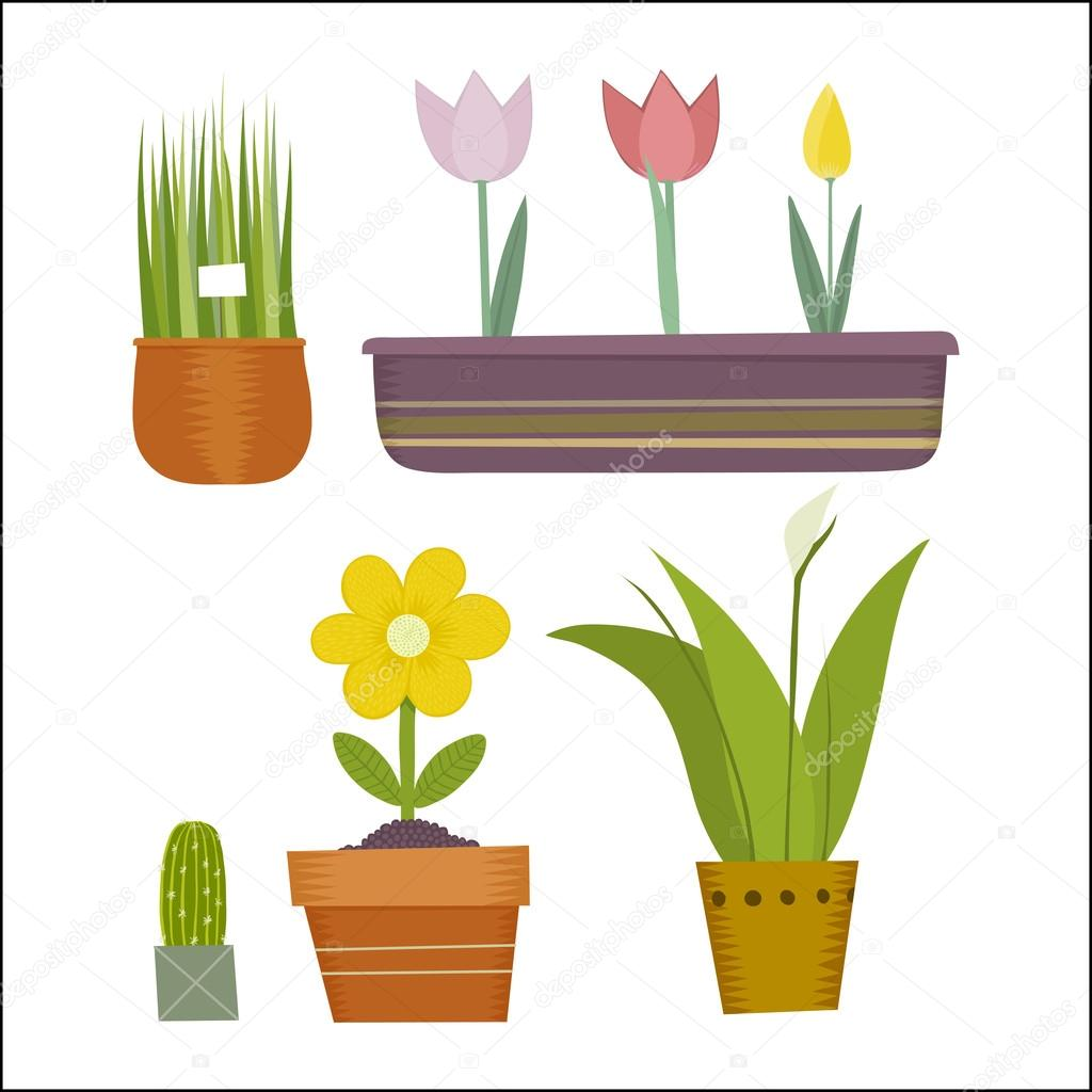 Pot plants set