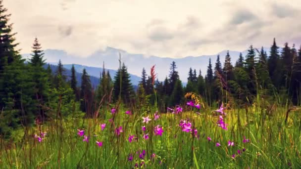 Wild flowers in Carpathian mountains. Time Lapse.