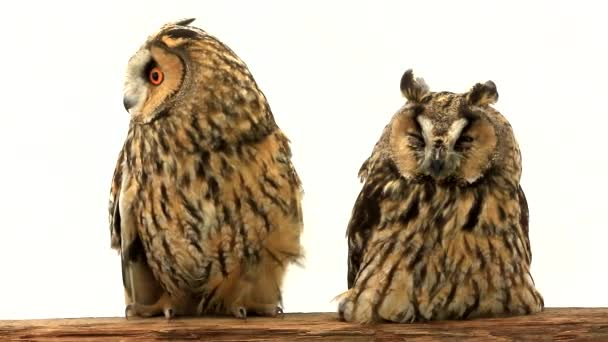two owls sit