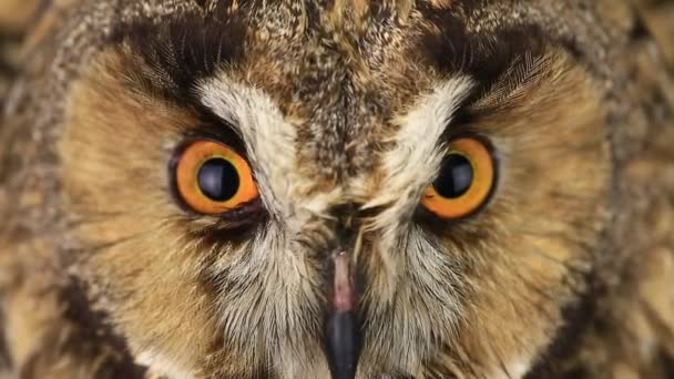 look of an owl with closing of eyes