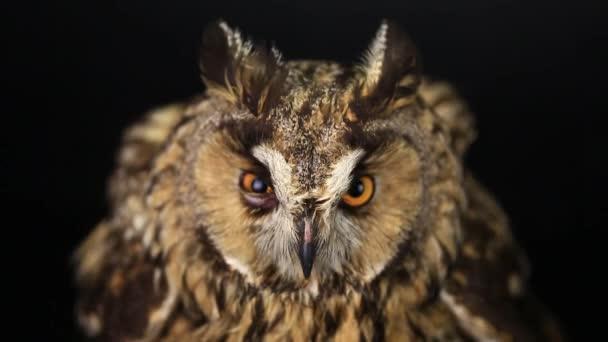vzhled jako sova s zavírání očí