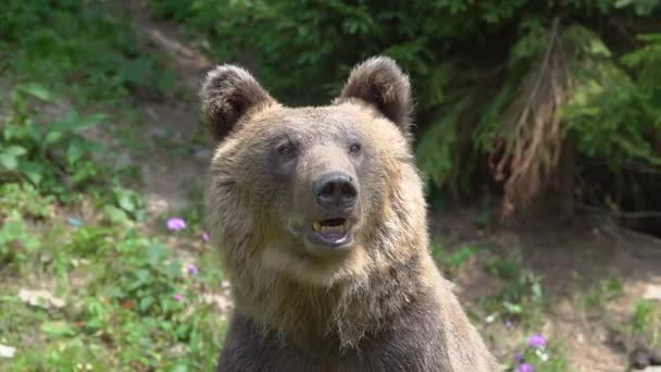 A portrait of a bear in the forest in slow motion.