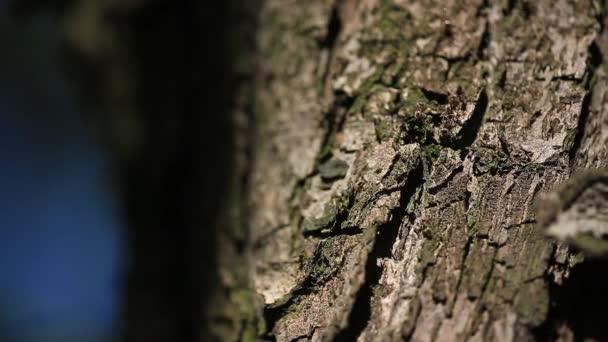 hangyák mászkálnának a fa