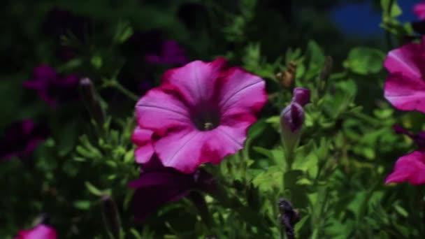 violet flowers outdoor