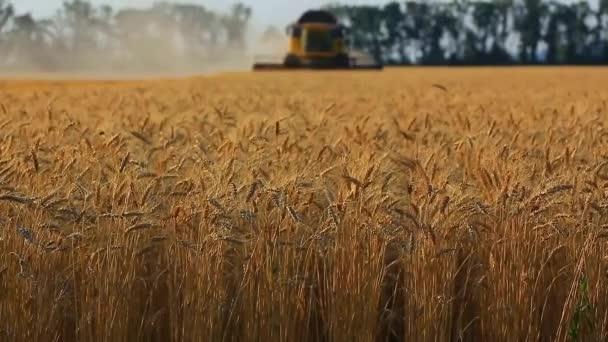 kombinovat, sklizeň pšenice