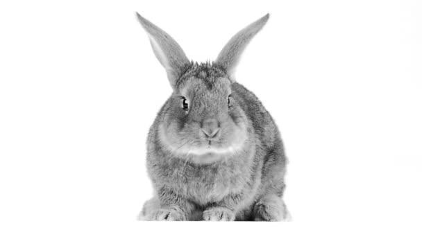 roztomilá králičí detail