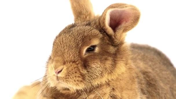 carino coniglio birichino