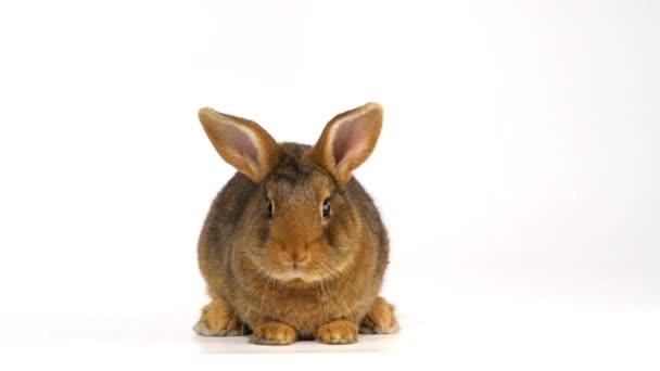 Süße flauschige Kaninchen