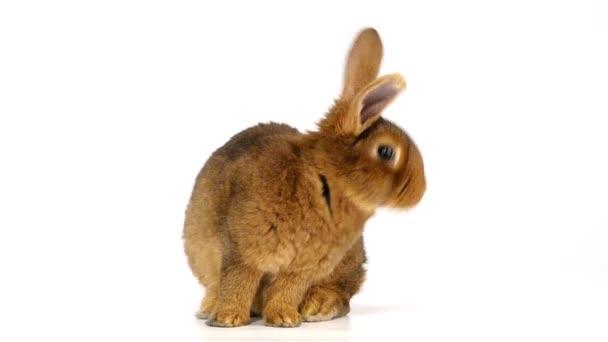 niedliche flauschige Kaninchen