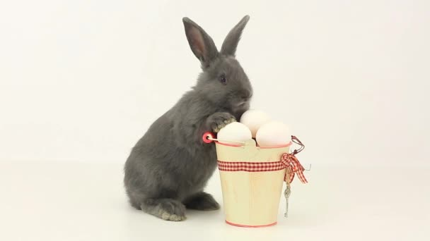 Gray fluffy rabbit with Easter eggs